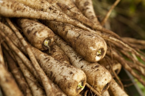 history of parsnips